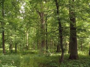 Superka mišką